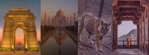 Tiger safari India | wildlife Tour India | wildlife safari India |Golden Triangle Tour India with Tiger Safari| Harsh Agarwal Photography