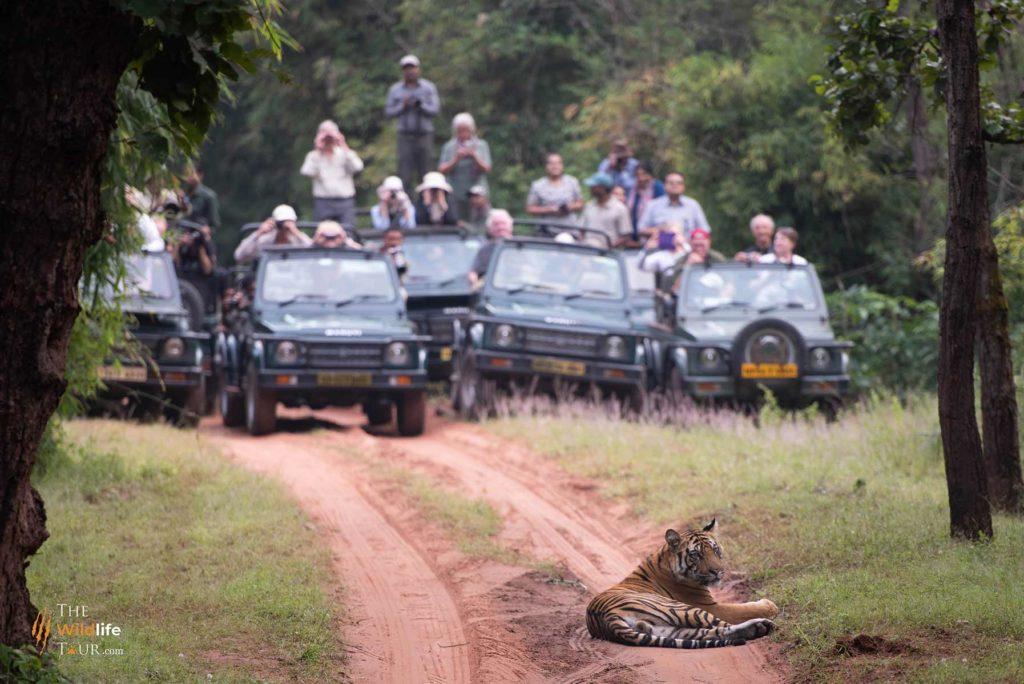 Tiger Safari in India | Wildlife Safari In India | Wildlife photography tour In India