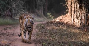 Wildlife Photo Tours, Wildlife Photography Tours India