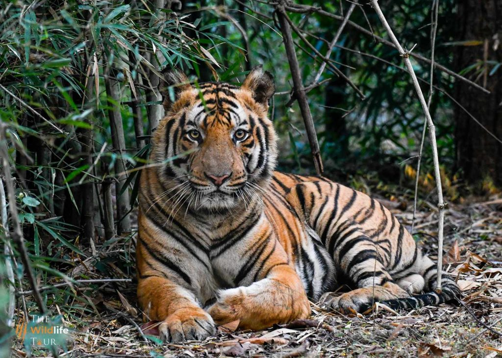 wildlife tour India | Tiger safari India |Tigers Tours India