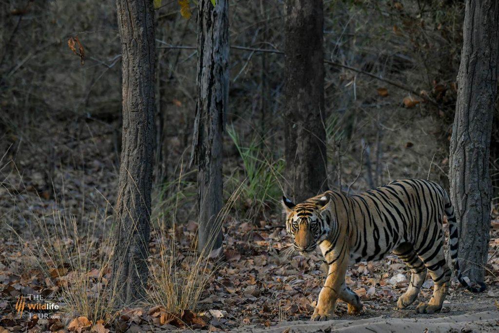 Tiger safari India   wildlife Tour India   wildlife safari India   Wildlife Photography Tour India